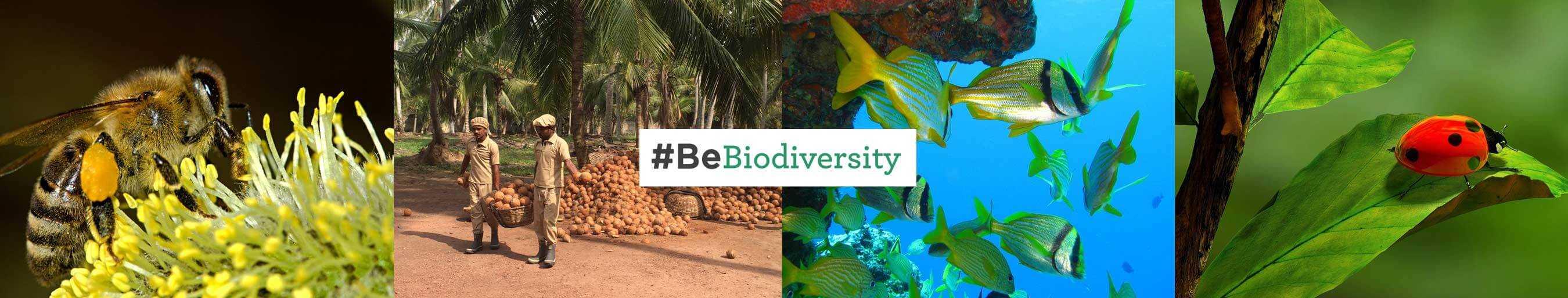 #BeBiodiversity: biodiversiteit belangrijk voor Amanprana