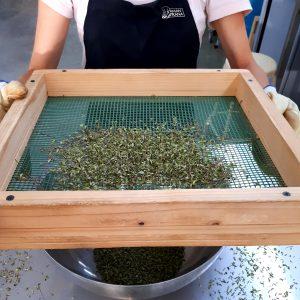 Procesando Sal Verde