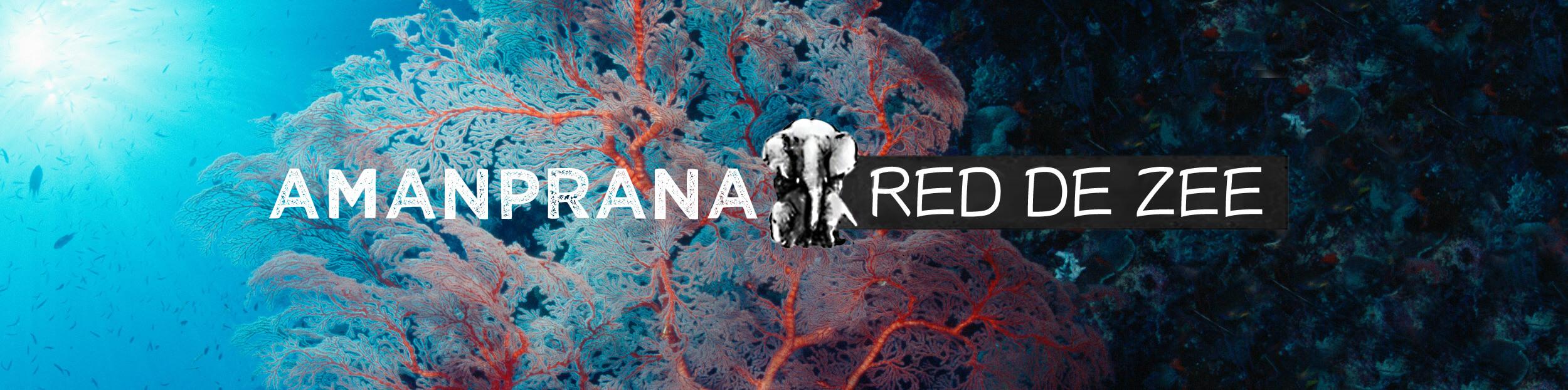 Red de Zee met Amanprana & streef naar schone oceanen, kusten